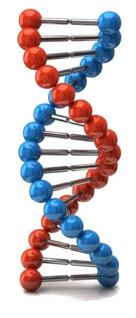 Анализы фрагментации ДНК HALO или TUNEL