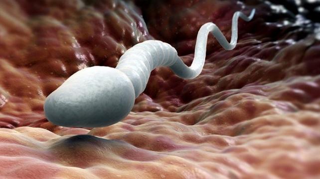 От чего зависит качество спермы
