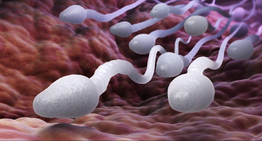 Почему сперматозоиды малочисленны или неподвижны