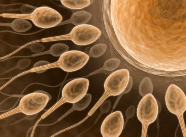 Продолжительность жизни и активность мужской спермы